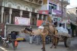 Camel Driven Water Tank - Jodphur